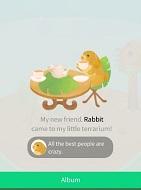 My Little Terrarium Animals Hints